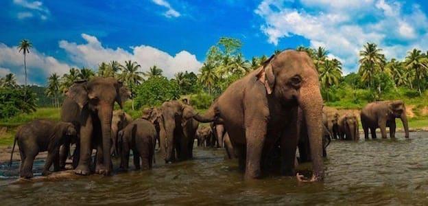 スリランカの国